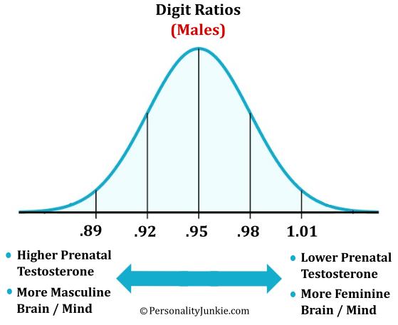 Male Digit Ratio Diagram